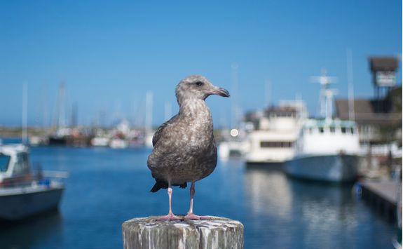 Seabird on Morro Bay