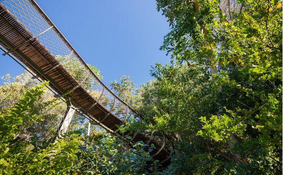 Kirstenbosch Gardens, Cape Town