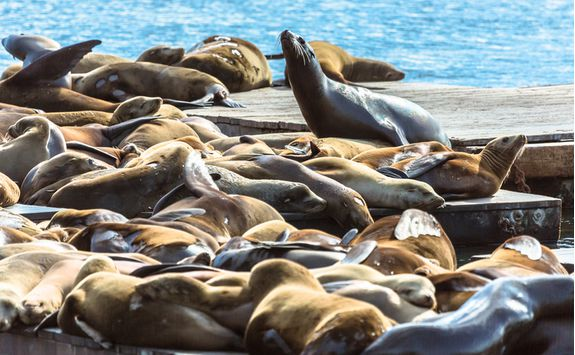 Catch a glimpse of a sea lion colony