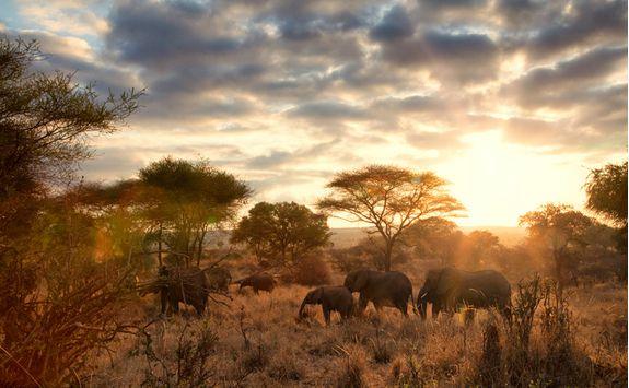 tarangire elephants sunrise