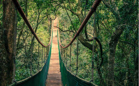 Plettenberg jungle bridge through canopy
