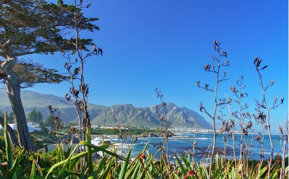 A view of Hermanus