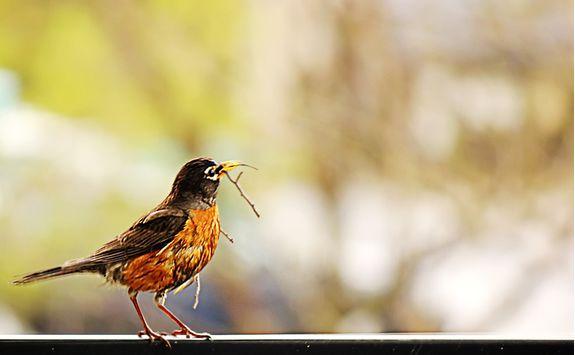 Birdlife, Tanzania