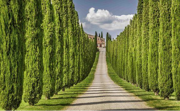 Winery in Tuscany