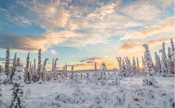 sunny snowy trees