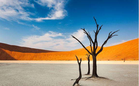 Dunes and a tree in Sossusvlei