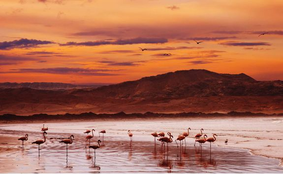 Flamingoes at sunset on the Skeleton Coast