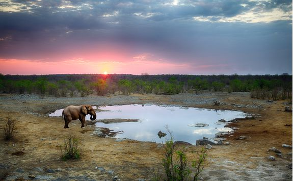 An elephant at a watering hole in Etosha