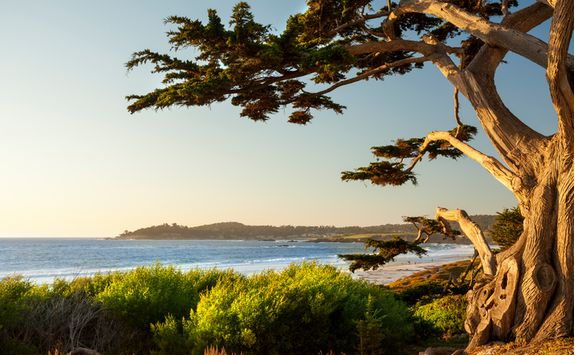 Colourful beachfront in Carmel by the Sea