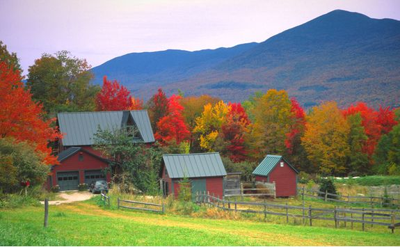 Trees in Vermont