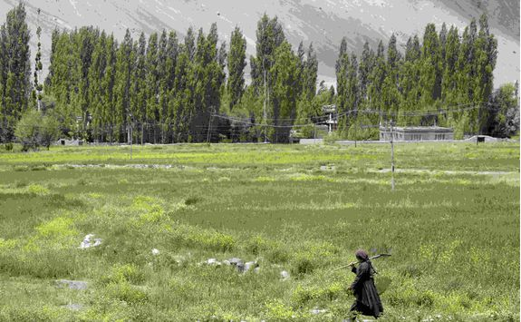 Ladakh fields