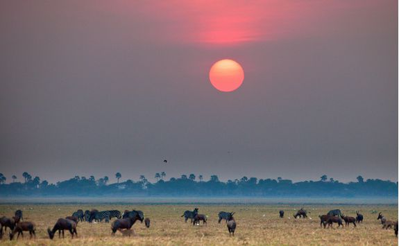 buffalo at sunset in Katavi