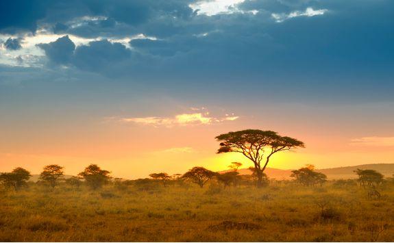Serengeti landscape at sunset