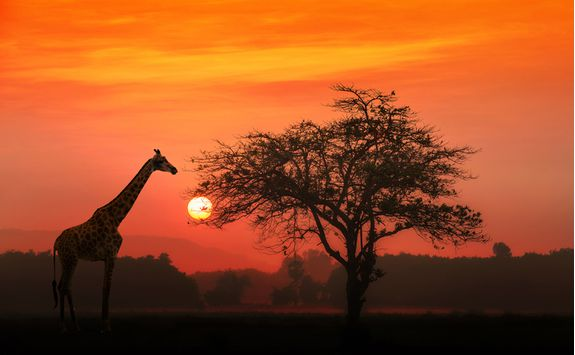 Sunset view of a giraffe and the plains in the Serengeti