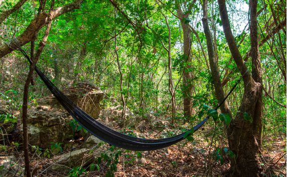 rainforest_hammock