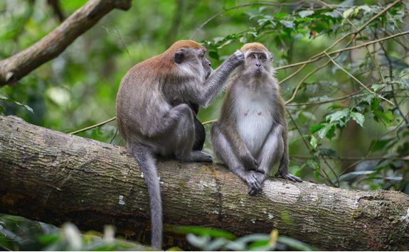 bukit_lawang_monkeys