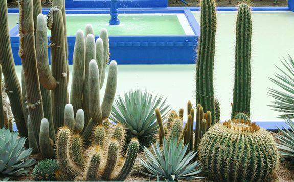 Marrakech cacti gardens