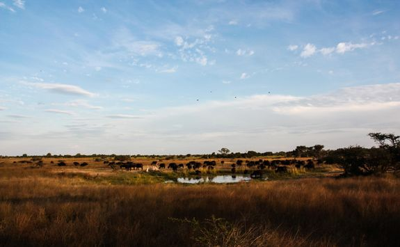 Watering hole in Chobe National Park