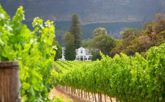Franschoekk vineyard