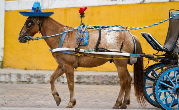 Horse and cart in Izamal