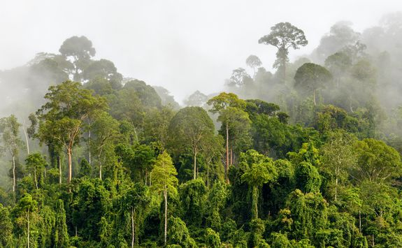 Mist over Sepilok rainforest