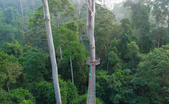 Walkway across the rainforest canopy