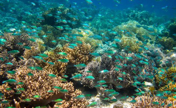 Coral reef off Gaya Island