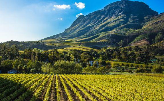 Sunny winery