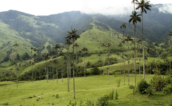Misty day in the Cocora Valley