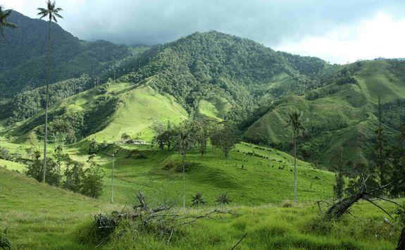 Lush hills of the coffee region