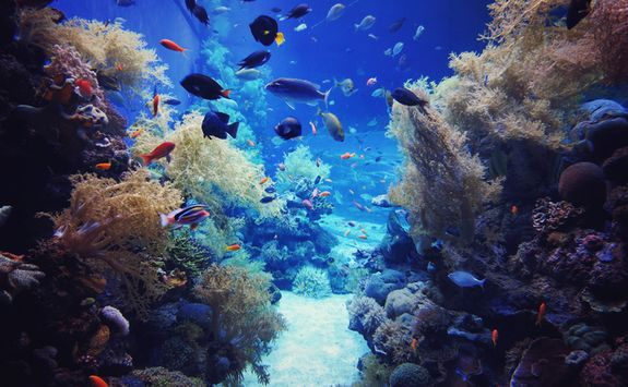 Tropical fish in a reef