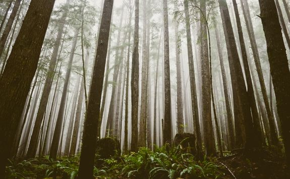 Forest on Vancouver Island