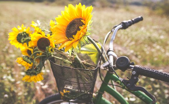 A bike with sunflowers in the basket
