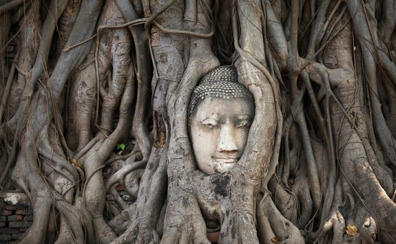 Ancient tree statue