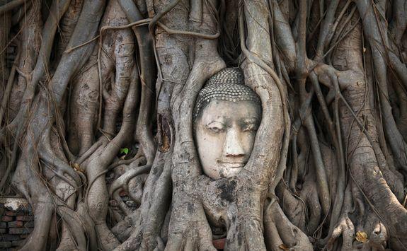 Ancient tree statue