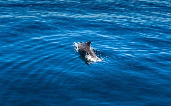 Dolphin in Madagascar