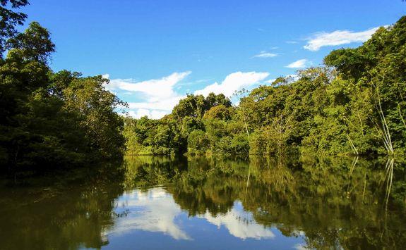 Greenery in the Amazon