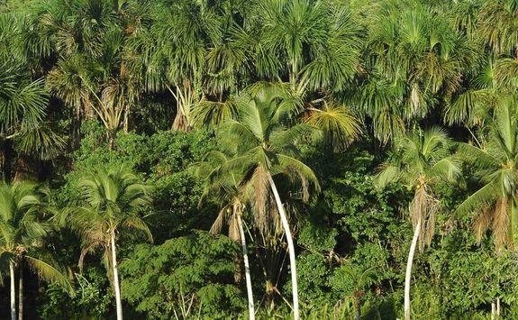 Green rainforest canopy