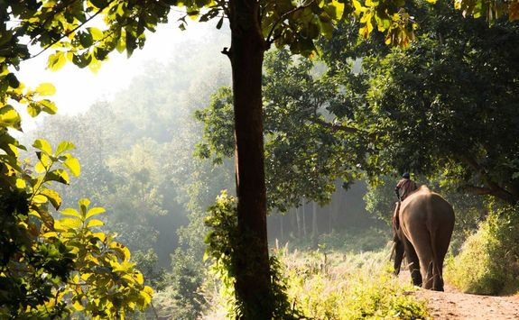 Elephant in forest