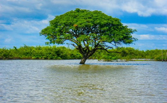 A Tree in the River