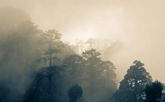 Misty skies