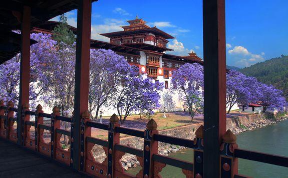 Blossom in Bhutan