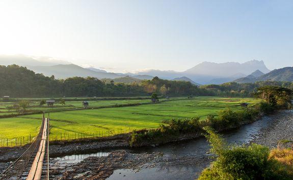 Bridge to a Paddy Field