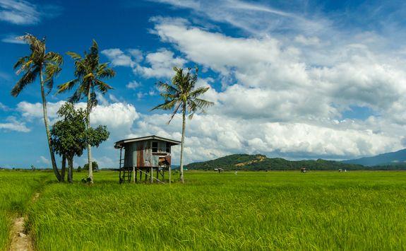 Hut in a Paddy Field