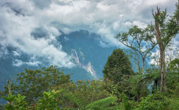 The Sandakan Rainforest