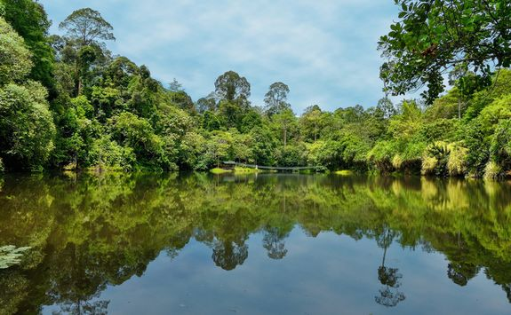 An Oxbow Lake