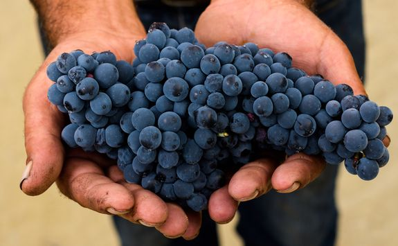 Grapes hand picked from the Douro valley