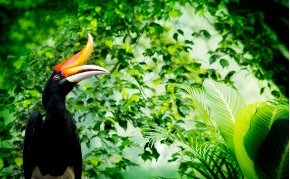 A Pecan Bird