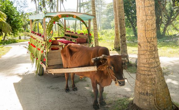 An ox pulling a cart