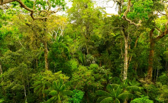A Green Rainforest